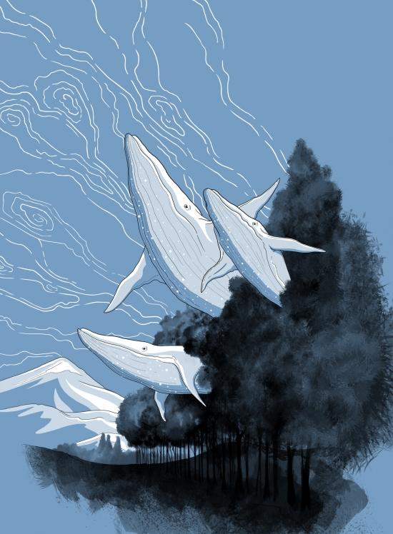 BaleineA.jpg